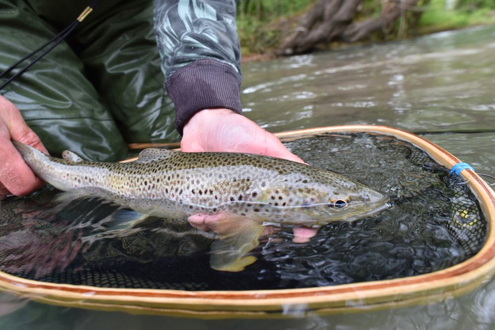 Essential Tackle for Trout Fishing