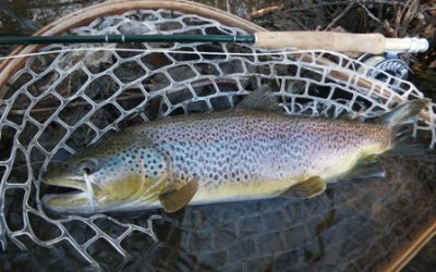 Best Fly Fishing Net (2019 Buyers Guide)