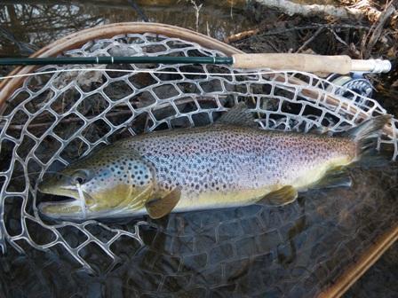 Choosing the Best Fly Fishing Net