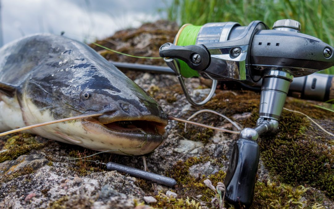 How To Catch, Clean, And Cook Catfish