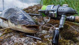 17 best catfish toys tech